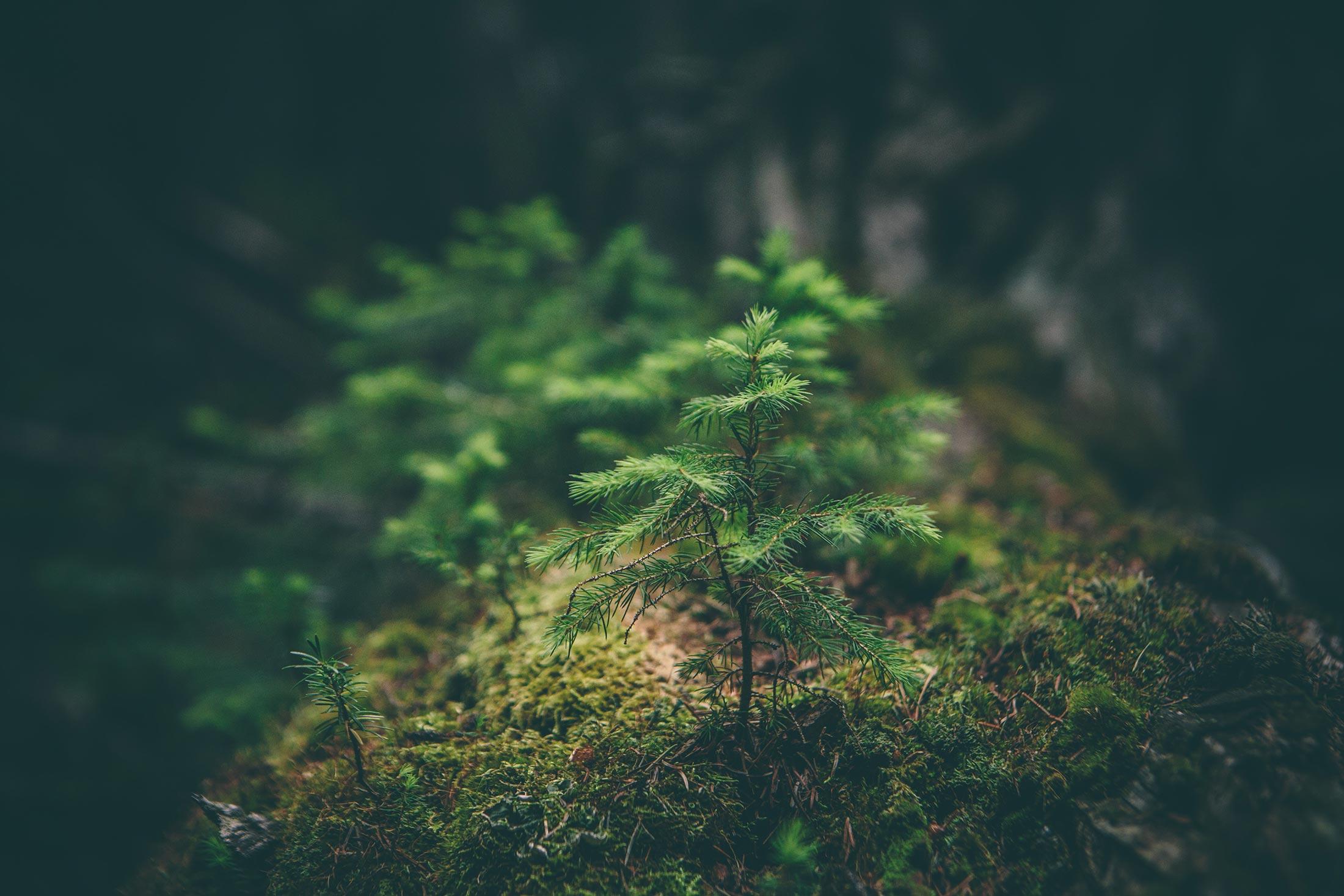 Massage suédois et ambiance forêt, nature : Mélanie Suédo Massage